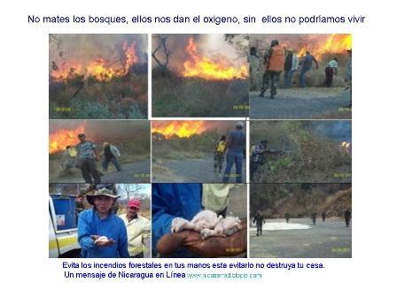20110814002104-incedios-forestales.jpg