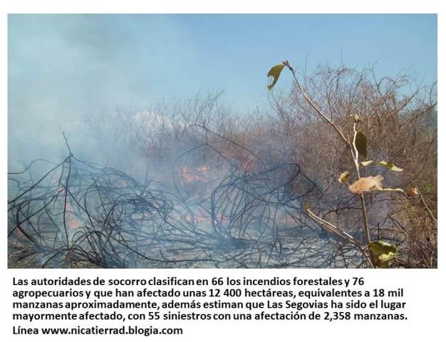 20140128030821-incendio-forestales.jpg