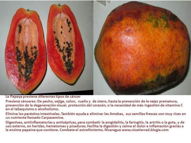 20140423021853-papayapt2b8e.pptm-autoguardado-.pptm-autoguardado-.jpg