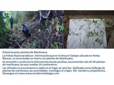 20140613194507-policia-incauta-siembro-de-marihuana.jpg